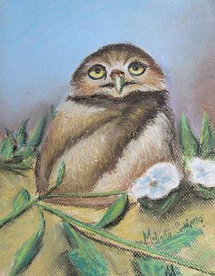 Burrowing Owl Of Cape Coral  Print by Melinda Saminski