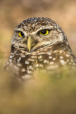 Florida Wildlife Photograph - Burrowing Owl Portrait by Joseph Rossbach