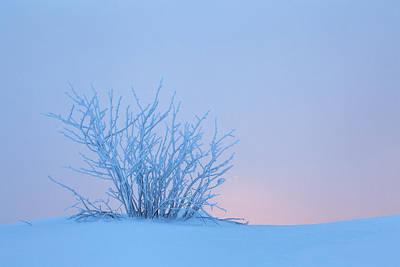 Bush In Snow In Morning Vosges France Print by Heike Odermatt