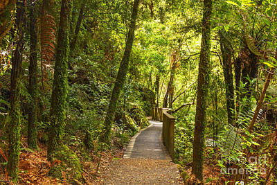 Bush Pathway Waikato New Zealand Print by Colin and Linda McKie