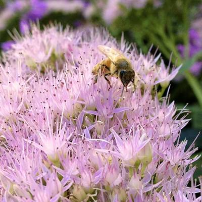Bloom Photograph - Busy Bee by Photographic Arts And Design Studio