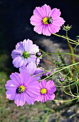 Busy Bees Print by Susan Leggett