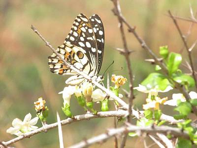Butter Fly Original by Vinayak Patukale