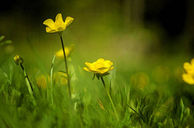 Childhood Photograph - Buttercup Buttercup by Donna Doherty
