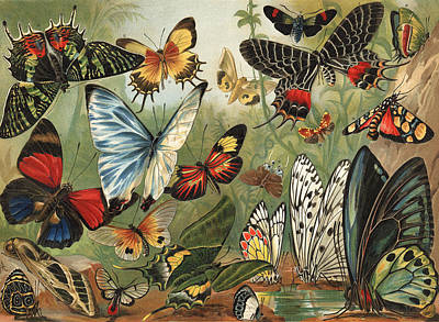 Insects Drawing - Butterflies 2 by Mutzel