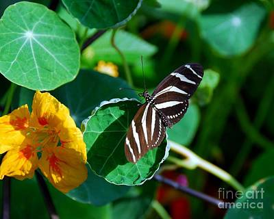 Butterflies Are Free Print by Mel Steinhauer