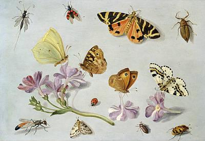 Butterflies Print by Jan Van Kessel