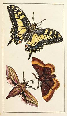 1819 Photograph - Butterflies by King's College London
