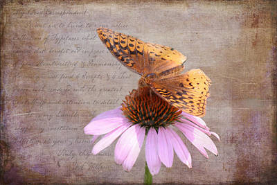 Butterfly And Flower Print by KJ DeWaal