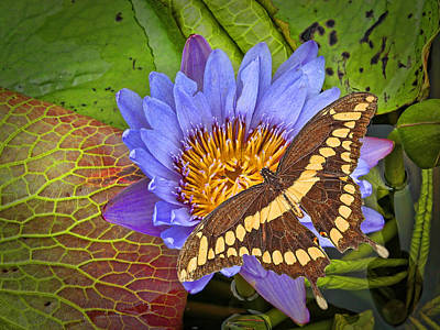 Butterfly And Lily Print by Rudy Umans