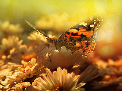 Wet Fly Digital Art - Butterfly  by Balazs Kovacs