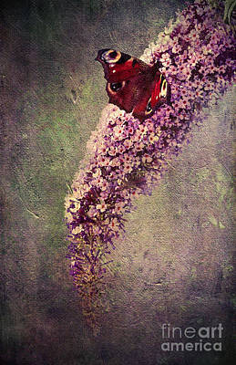 Floral Mixed Media - Butterfly Bush by Svetlana Sewell
