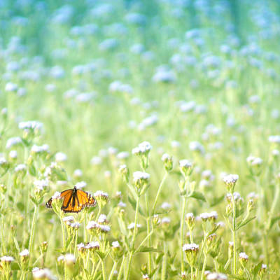 Photograph - Butterfly Dreams by Holly Kempe