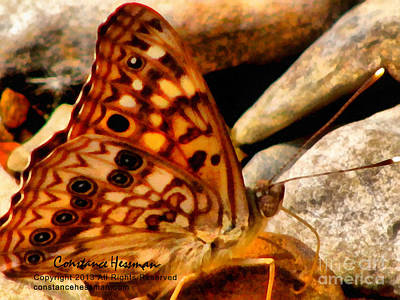 Butterfly Painting - Butterfly Enchantment by Constance Hessman