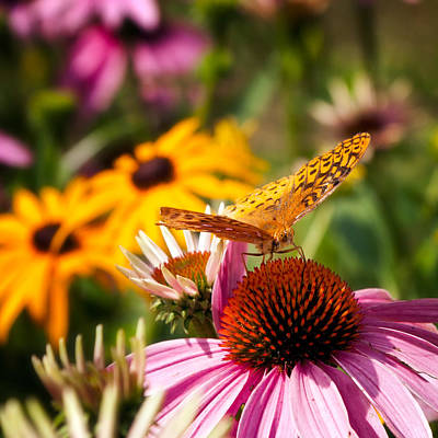 Butterfly In Paradise Print by Bill Wakeley