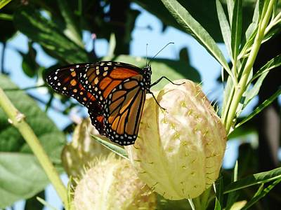 Butterfly Print by Jennifer Wartsky