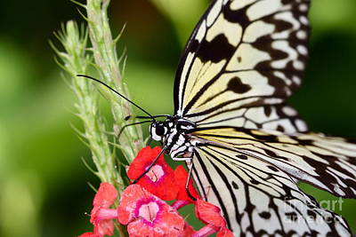 Flowers Photograph - Butterfly Kisses by Pamela Gail Torres