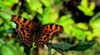 Digitalart Photograph - Butterfly by Martin Newman