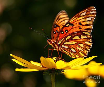 Butterfly On Flower Print by Joan McCool