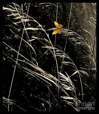 Wrap Digital Art - Butterfly On Grasses by Marsha Heiken