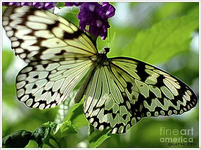 Kathleen Photograph - Butterfly On Purple by Kathleen Struckle