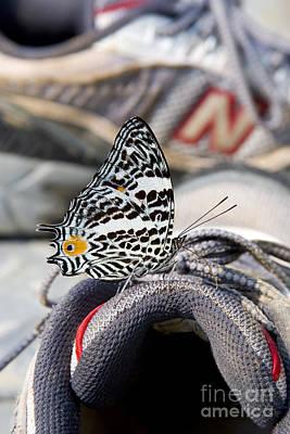 Sneaker Photograph - Butterfly On Sneaker by Gregory G. Dimijian, M.D.