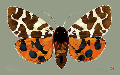 Butterfly -  Pop Stylised Etching Art Poster  Print by Kim Wang