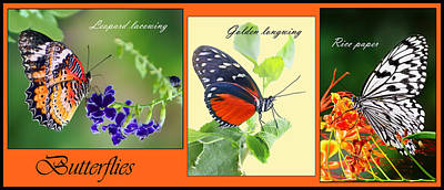 Lacewing Photograph - Butterfly Triptych by Nikolyn McDonald