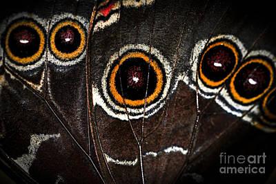 Butterfly Wing Print by Elena Elisseeva