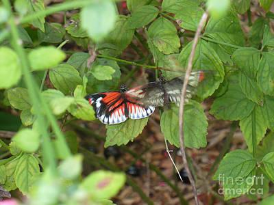 Butterfly1 Print by Kryztina Spence