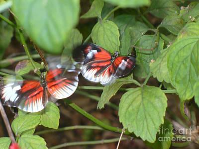 Butterfly3 Print by Kryztina Spence