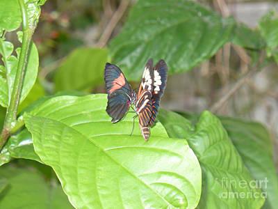 Somewhere Higher Photograph - Butterfly4 by Kryztina Spence