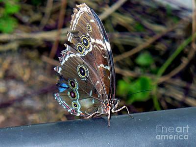 Somewhere Higher Photograph - Butterfly5 by Kryztina Spence