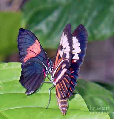 Butterfly6 Print by Kryztina Spence