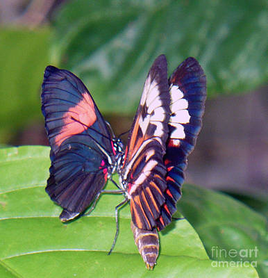 Somewhere Higher Photograph - Butterfly6 by Kryztina Spence