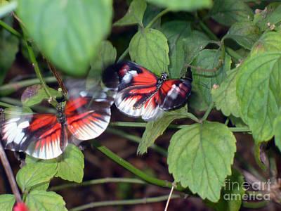 Butterfly7 Print by Kryztina Spence