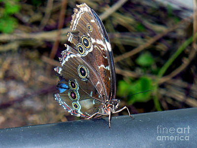 Butterfly8 Print by Kryztina Spence