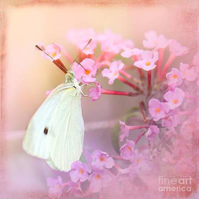 Cabbage Digital Art - Butterrfly Joy by Betty LaRue
