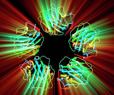 C-reactive Protein Print by Pasieka
