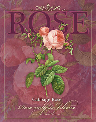Cabbage Painting - Cabbage Rose by Tammy Apple