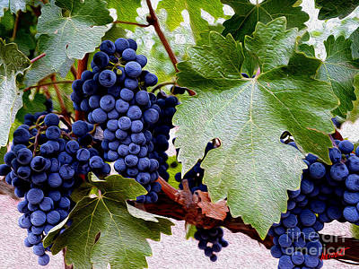 Cellar Photograph - Cabernet Grapes by Jon Neidert