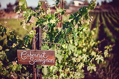 Grape Vine Photograph - Cabernet Vineyards by April Reppucci