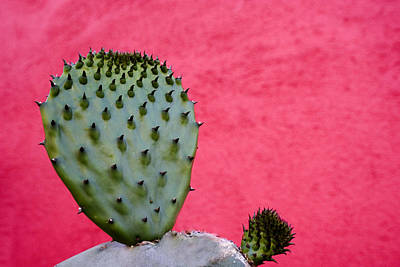 Rectangles Photograph - Cactus And Pink Wall by Carol Leigh