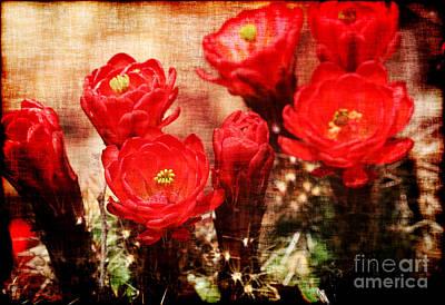 Cactus Flowers Print by Julie Lueders