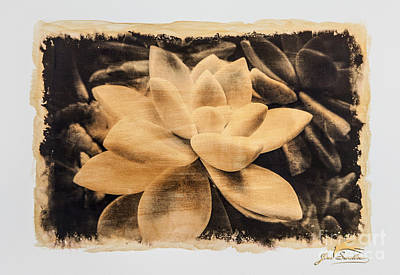 Gold Tone Photograph - Succulent Gold #1 Special Printing  by Jim Swallow