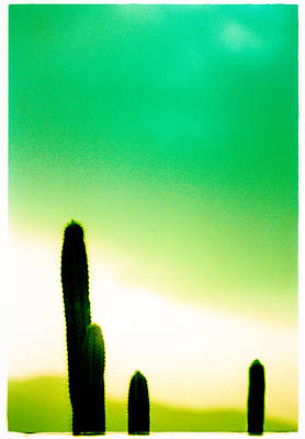Cactus In The Morning Print by Yo Pedro