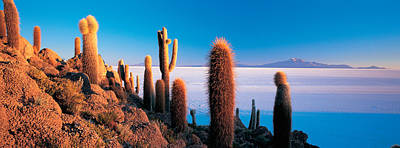 Cactus On A Hill, Salar De Uyuni Print by Panoramic Images
