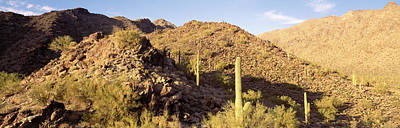 Cactus Plants On A Landscape, Sierra Print by Panoramic Images