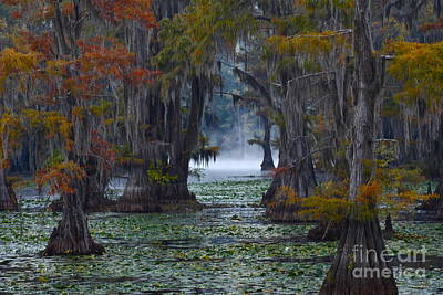 Autumn Photograph - Caddo Lake Morning by Snow White