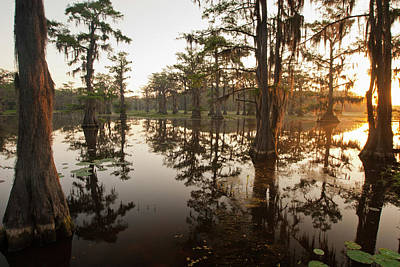 Caddo Lake, Texas At Sunrise Print by Larry Ditto